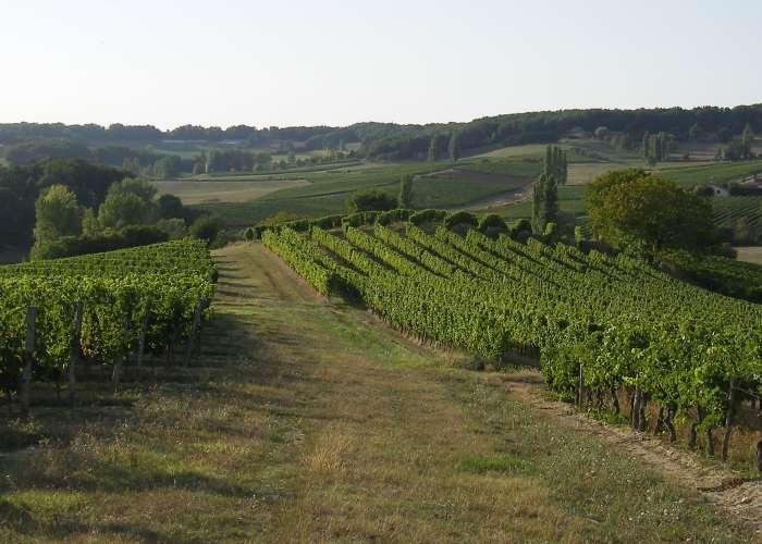 image de Château Bois Clair - Frédéric SERNAGLIA