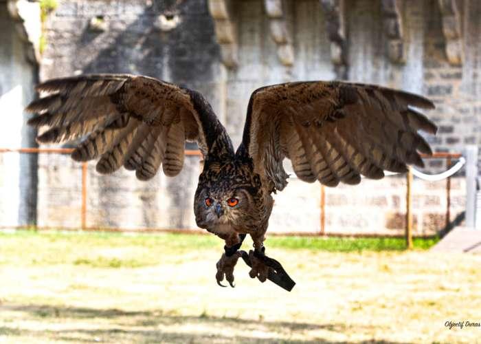 image de Spectacle majestueux de fauconnerie