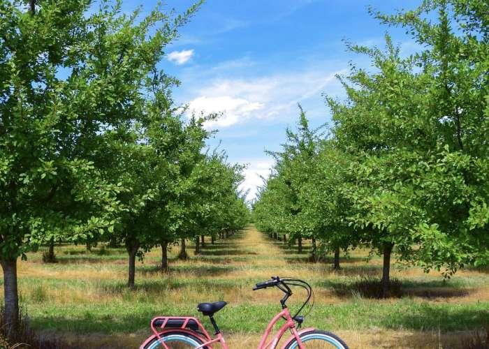 image de Office de Tourisme du Pays de Duras en partenariat avec Good Turn Cycles